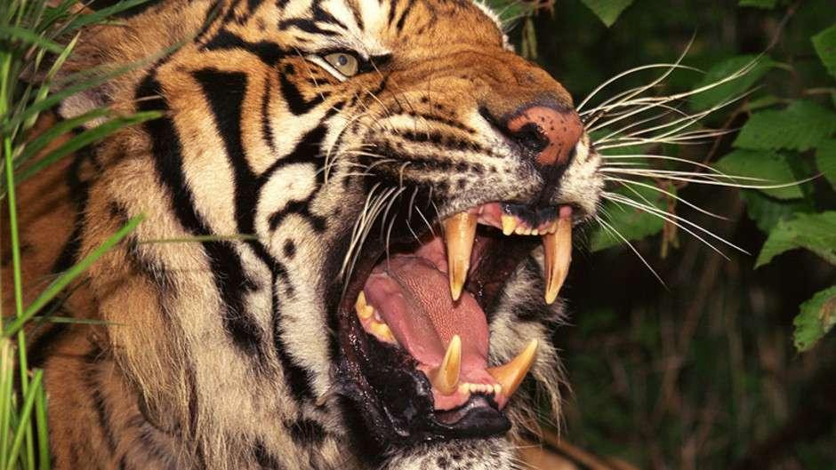 Những Loài Động Vật Nguy Hiểm Nhất (2007)